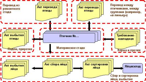 Основные этапы процессов содержания материнского и промышленного стада
